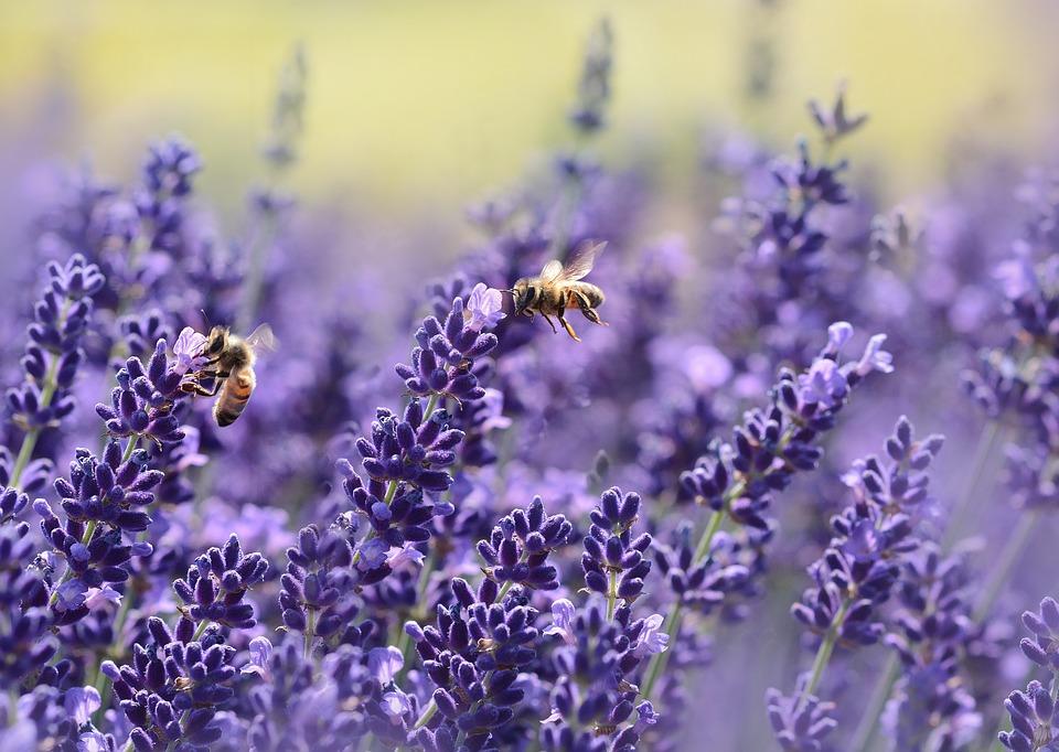 4 Techniques to Attract Backyard Pollinators