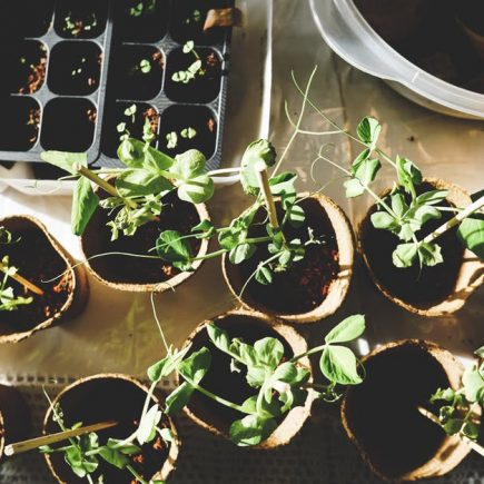 Some Awesome DIY Indoor Gardening Tips