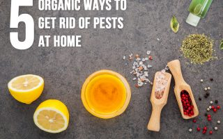 5 Organic Ways to Get Rid of Pests at Home