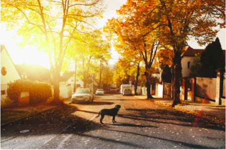 9 Factors to Consider when Choosing a Friendly Neighbourhood