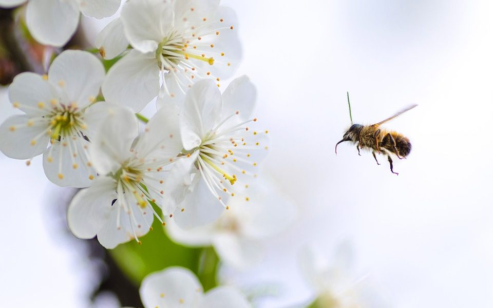 Pest Control Tips to Keep Pests Away in Summer Time