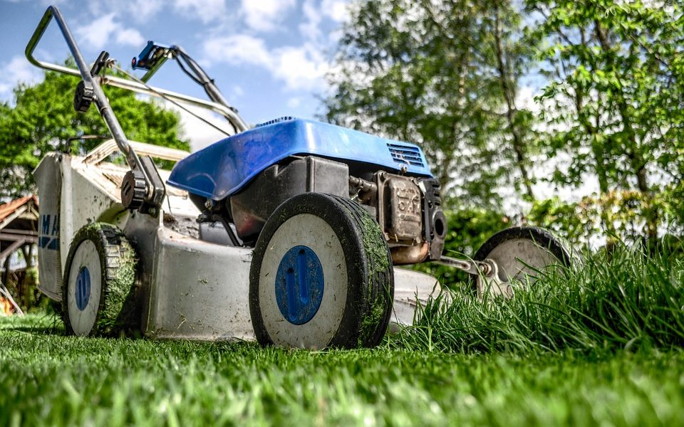 Top 7 Tips for Seeding a Lawn