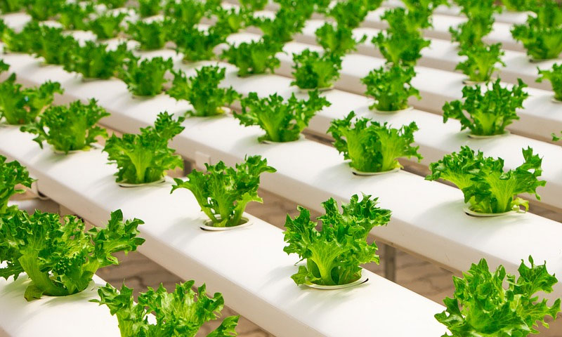 BENEFITS OF HYDROPONICS