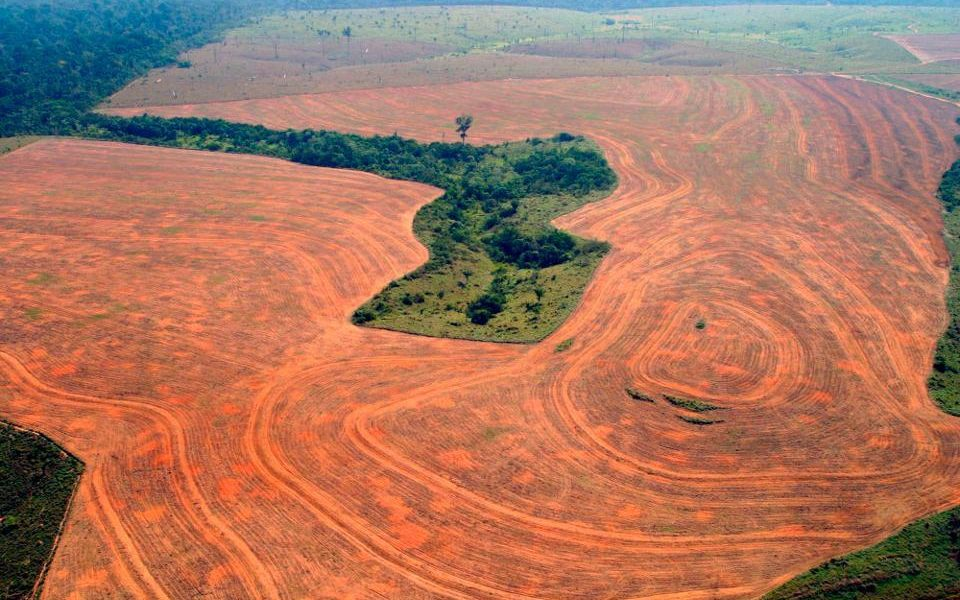 Deforestation Boon or Curse for Humanity In The Future