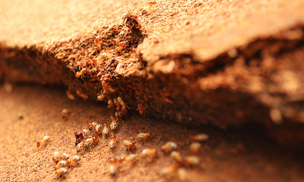 how to prevent termite attack