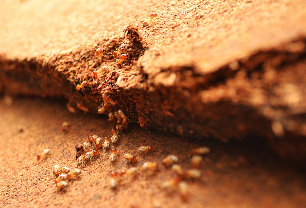 how to prevent termite attack