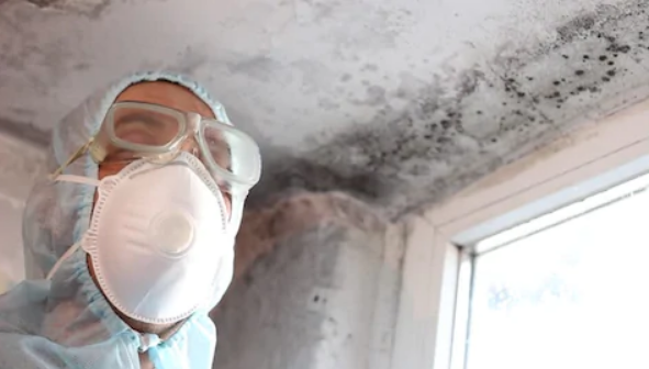 Low-Cost Mold Remediation