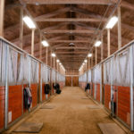 The Pros and Cons of Equine Sheds