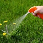 How To Prevent & Kill Dandelions