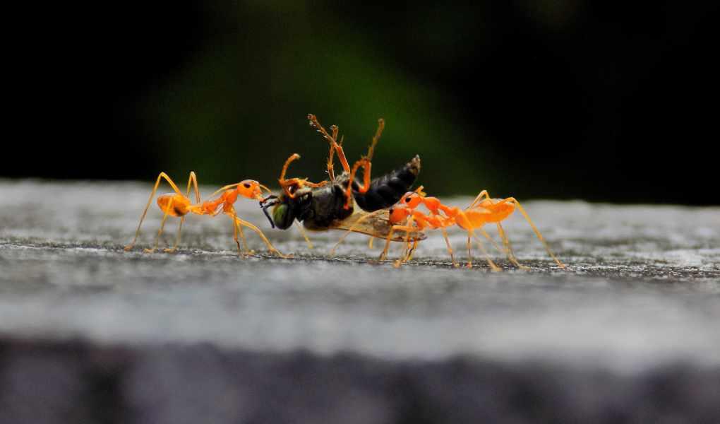 Ant Bait Tips Professionals