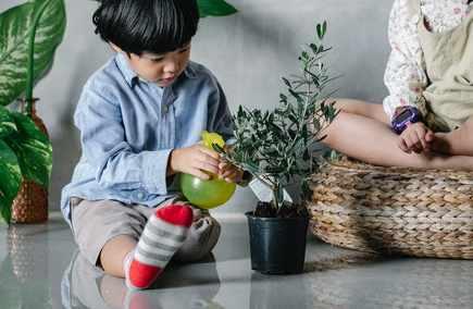 Best Pots for Your Plants